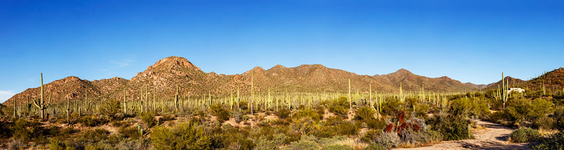 Late Afternoon Panorama at Saguaro West