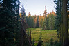 Meadow in Kings Canyon National Park