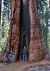 Here's another example of just how big the trees are.