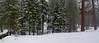Snow Scene in Sequoia National Park