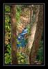_NJG3585: Chimney Top Trail.