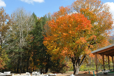 A vibrant tree in the construction area of the visitor center