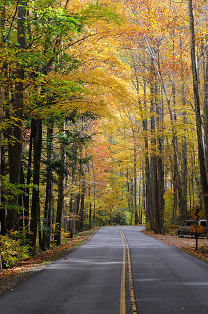 The road to Cade's Cove covered in golden fall foliage