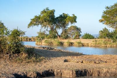 Mikumi Hippo Pool