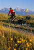 Mountain biker pulling BOB trailer in Grand Teton Nat'l Park - 2 - 72 ppi