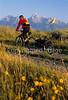 Mountain biker pulling BOB trailer in Grand Teton Nat'l Park - 2 - 72 ppi