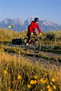 Mountain biker pulling BOB trailer in Grand Teton Nat'l Park - 4 - 72 ppi