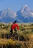 Mountain biker pulling BOB trailer in Grand Teton Nat'l Park - 5 - 72 ppi