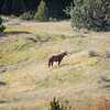 Feral Horse #2