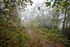 Biker on road to Fort Cobun near Grand Gulf Military Park, Mississippi - D5 -C2- PSed - hor - 72 ppi