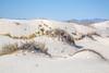 White Sands National Monument, NM - C1-0118 - 72 ppi