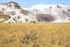 White Sands National Monument, NM - C1-0097 - 72 ppi