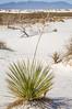 White Sands National Monument, NM - C1-0186 - 72 ppi