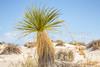 White Sands National Monument, NM - C1-0188 - 72 ppi