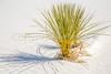 White Sands National Monument, NM - C1-0184 - 72 ppi