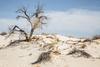 White Sands National Monument, NM - C1-0157 - 72 ppi