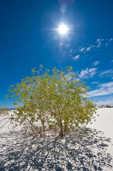 Backlit bush in the Dunes
