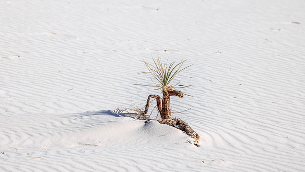 Sprout's Struggles In the Desert