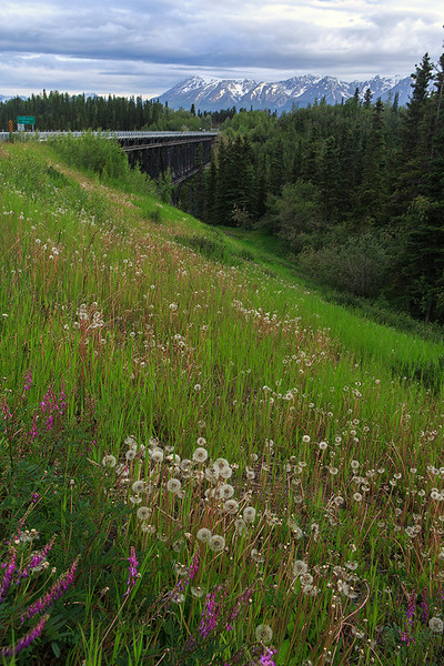 Wildflowers, Kuskulana River bridge, and Wrangell mountains