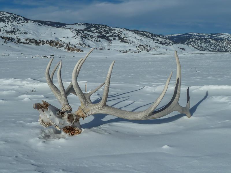 Elk Antler in a Winter Landscape