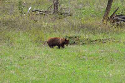 Bear near the Northeastern exit of the park