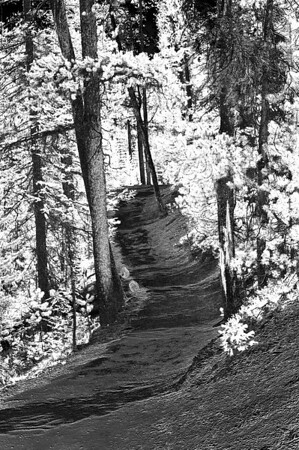 Infra Red view of the South Rim Canyon trail.