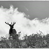 Deer on ridge at parking lot of Upper Falls