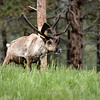 Reindeer at Bear Country