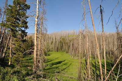 Burned trees from wild fires