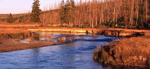 Madison River in the western protion of Yellowstone