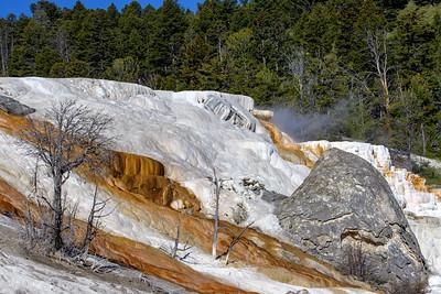 Yellowstone National Park June 2018