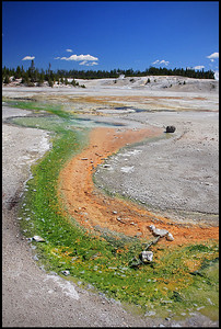 Colorful Geothermal Features, Porcelain Basin Trail, Norris Geyser Basin
