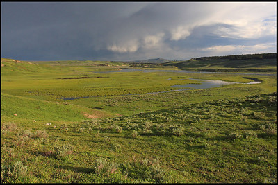 Hayden Valley with Incoming Storm, Early Morning, Yellowstone National Park