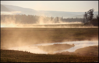 Early Morning Fog along Madison River, Yellowstone National Park