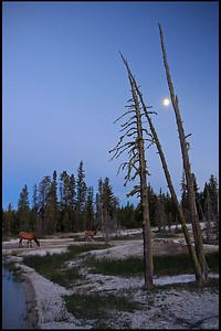 Deer grazing at West Thumb Geyser Basin, Moon Rising, Yellowstone National Park