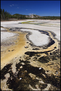 Colorful thermal features, Porcelain Basin Trail at Norris Geyser Basin