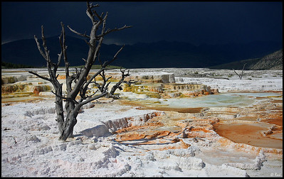 Tree and Mammoth Hot Springs, with Incoming Thunderstorm, Yellowstone National Park  Mammoth is a large hill of travertine that has been created over thousands of years as hot water from the spring cooled and deposited calcium carbonate (over two tons flows into Mammoth each day in a solution).   Shallow circulation along this corridor allows Norris' superheated water to slightly cool before surfacing at Mammoth, generally at about 170°F (~77°C). Algae living in the warm pools have tinted the travertine shades of brown, orange, red and green.
