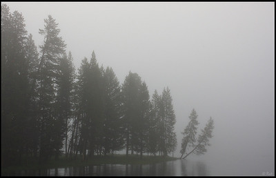 Trees and Yellowstone River, Foggy Morning, Yellowstone National Park