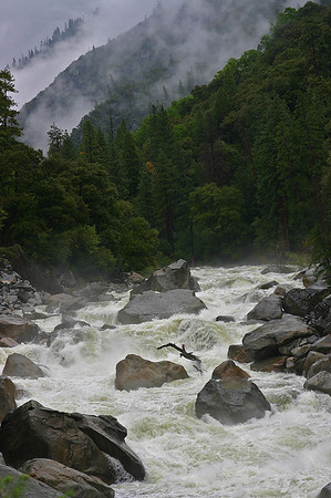 Early Spring 2009.  Merced River wild water.