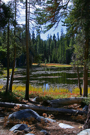 Pond - Fall - Tioga Pass