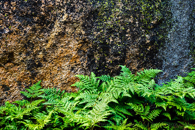 Natural Textures: Rock and Fern