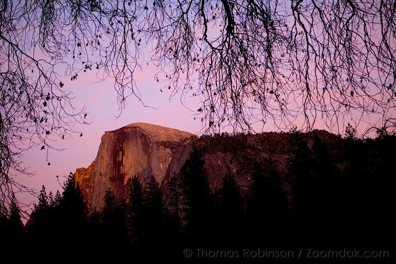 Seen from Yosemite valley floor, Half Dome is illuminated with the pink evening alpenglow.