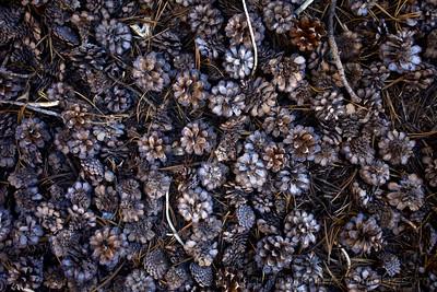 Pinecone Texture