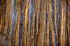 Incense Cedar Texture