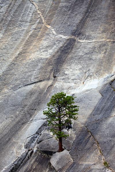Tree and Granite 1