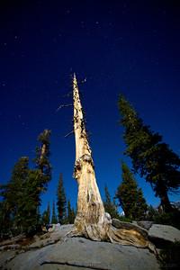 Tree Scrag by Night