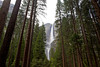The full height of Yosemite Falls is visible through the trees from the valley floor. Yosemite Falls is the highest measured waterfall in North America with a total fall of 2,425 feet (739 m).