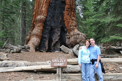 The Grizzly Giant