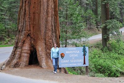 Entrance of Mariposa Grove