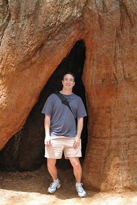 Patrick standing in a sequoia stump in Tuolomne Grove